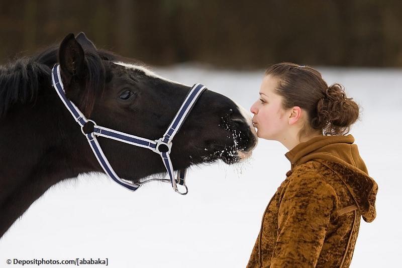 Pferdebauern aufgepasst: Pferdenarr sucht Pferdenarr