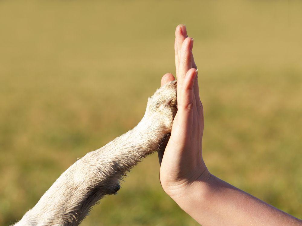 Tipps für Agrarsingles: Was wir von Tieren über Liebe lernen